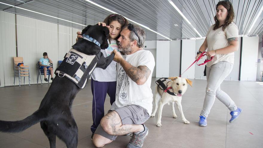 Los perros vuelven al trabajo tras el confinamiento