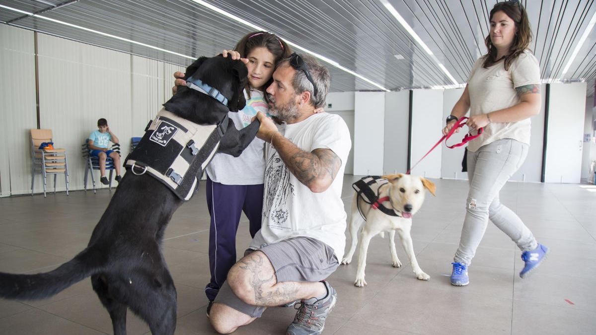 Una imagen de perros en un Centro de educación especial en Castellón.