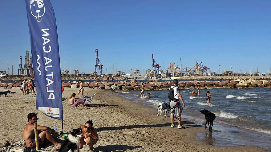 La playa para perros se convierte también en un atractivo turístico