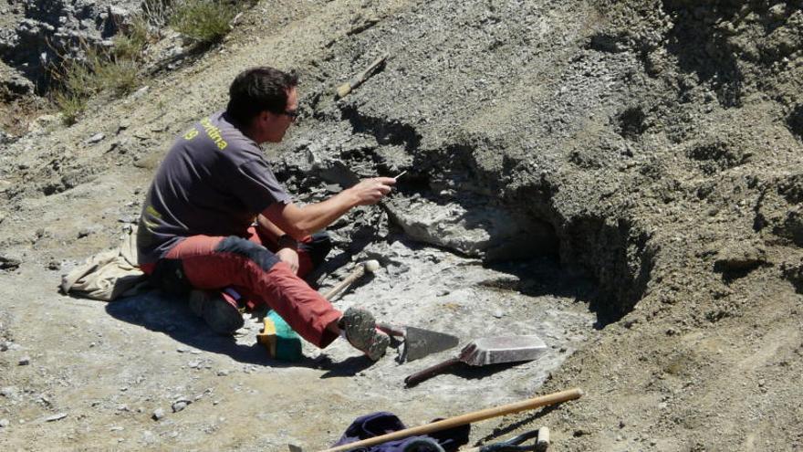 Descobreixen a Catalunya el jaciment de dinosaures més modern d'Europa