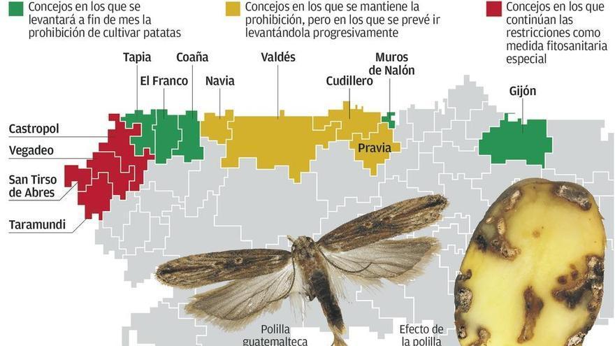 El cultivo de patatas vuelve a permitirse en Tapia, Gijón, Muros, El Franco y Coaña