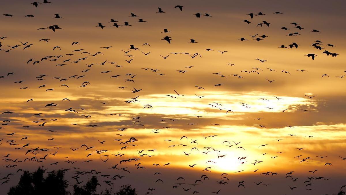 Els òptims climàtics de moltes espècies d'ocells s'estan desplaçant.