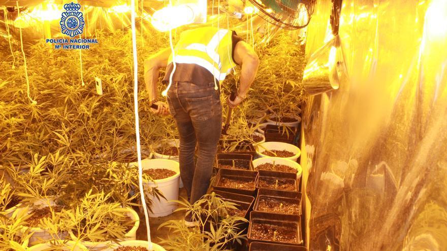 Detenido un joven en Murcia por utilizar una nave para cultivar marihuana
