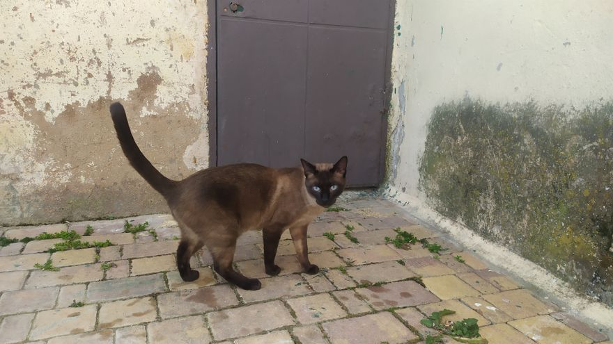 València se marca como objetivo esterilizar al 90% de los gatos callejeros