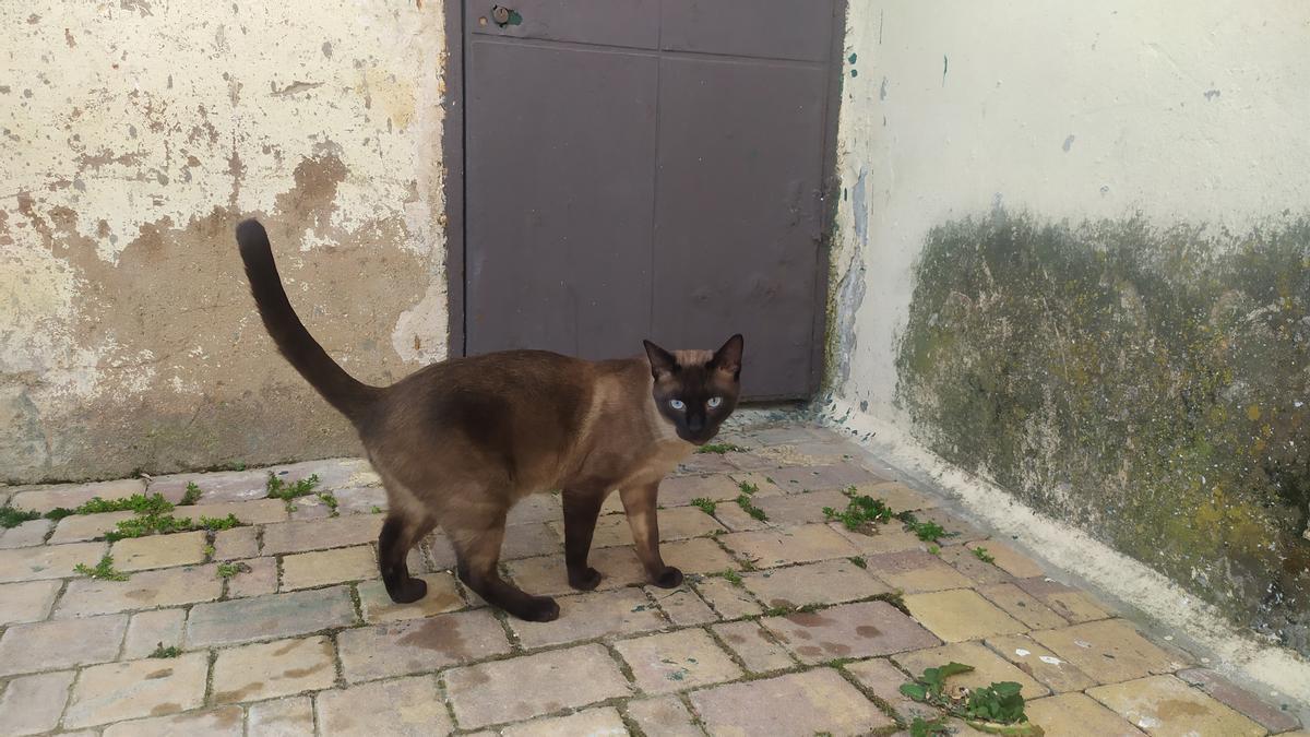 Un gato en las calles de València.