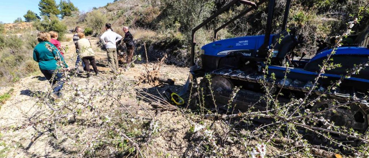 Un grupo de agricultores en una parcela con almendros acabados de arrancar en Fageca, municipio de El Comtat.