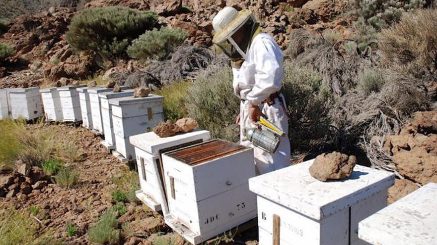 La sequía lleva a la apicultura a sus peores resultados históricos