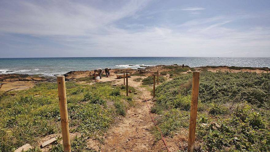 Torrevieja y el Consell protegen una microrreserva de flora para salvar una planta de la extinción