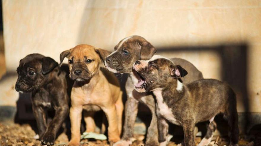 Son Reus registra una subida del abandono de mascotas del 63%