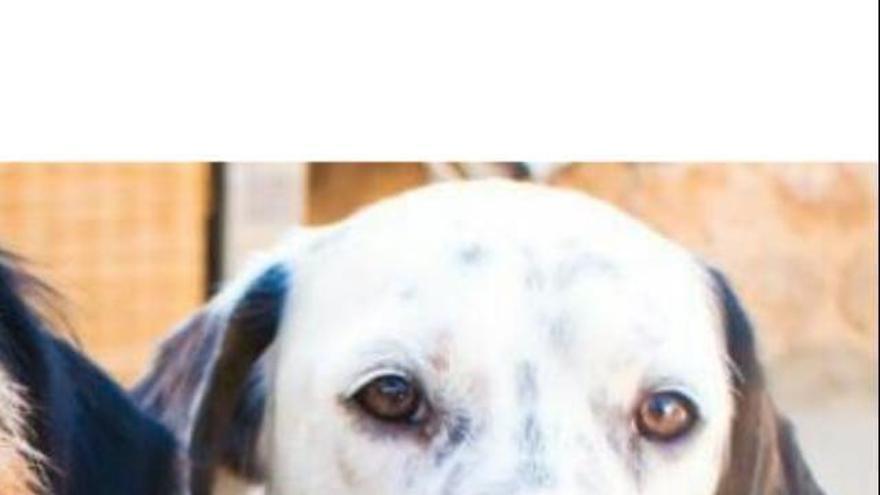 Unos turistas valencianos buscan a su mascota desaparecida en Gijón