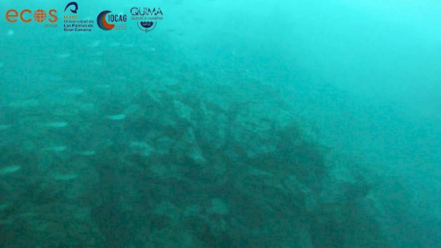 """Los peces se acercan a la fajana de La Palma, que es un lugar """"excepcional"""", dice biólogo"""