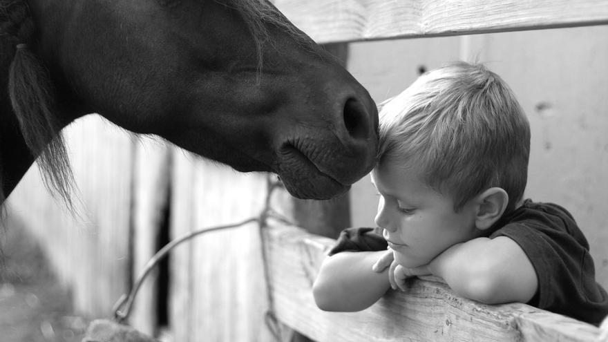 Els cavalls i el poder de la seva teràpia