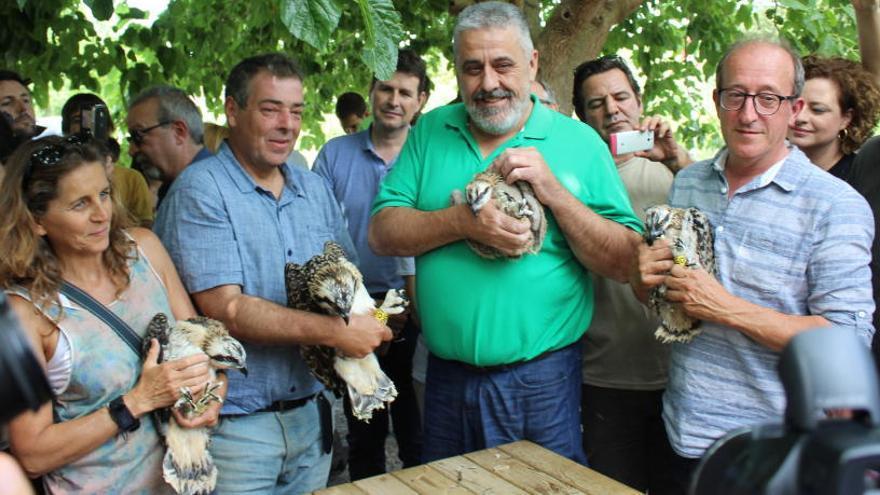 El águila pescadora regresa a la Marjal de Pego-Oliva tras 38 años