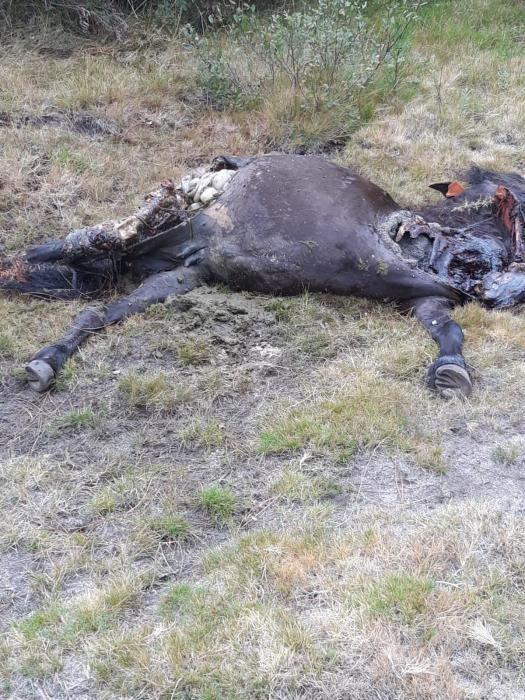 Sucesos en Pontevedra | Los lobos devoran a dos yeguas en el Monte Castrove