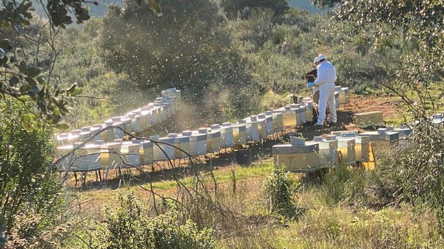 El Itacyl forma online a más de 250 apicultores sobre innovación en el sector
