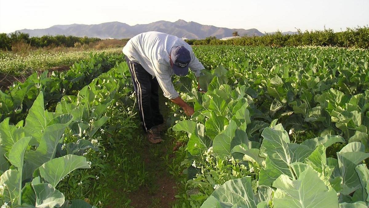 Torreblanca alega contra el PAT por frenar su desarrollo agrario