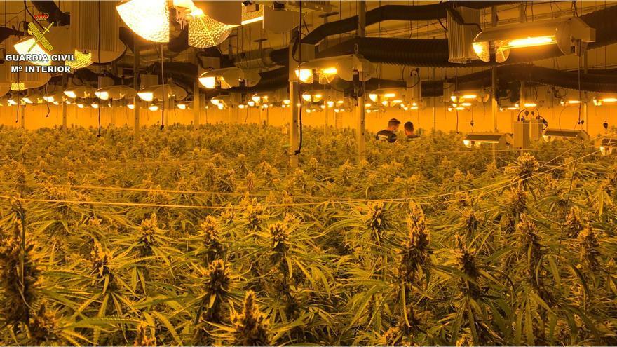 Seis detenidos con casi 5.000 plantas de marihuana en una nave de Sax