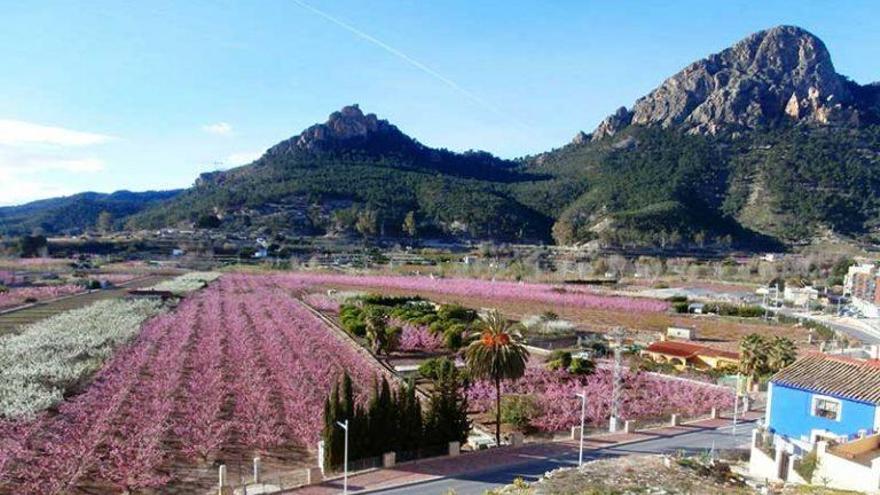 Una ruta motera para disfrutar de la floración de Cieza