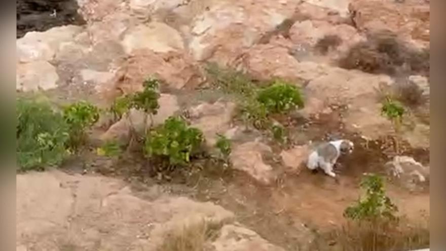 Ibiza: lleva a su perro en moto acuática a hacer sus necesidades en tierra y vuelve a su yate sin recogerlas
