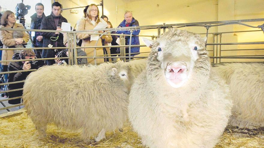 Dolly, las lecciones del fracaso de la clonación