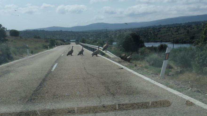Peligro en la carretera N-631 en Rionegro por el atropello de un jabalí
