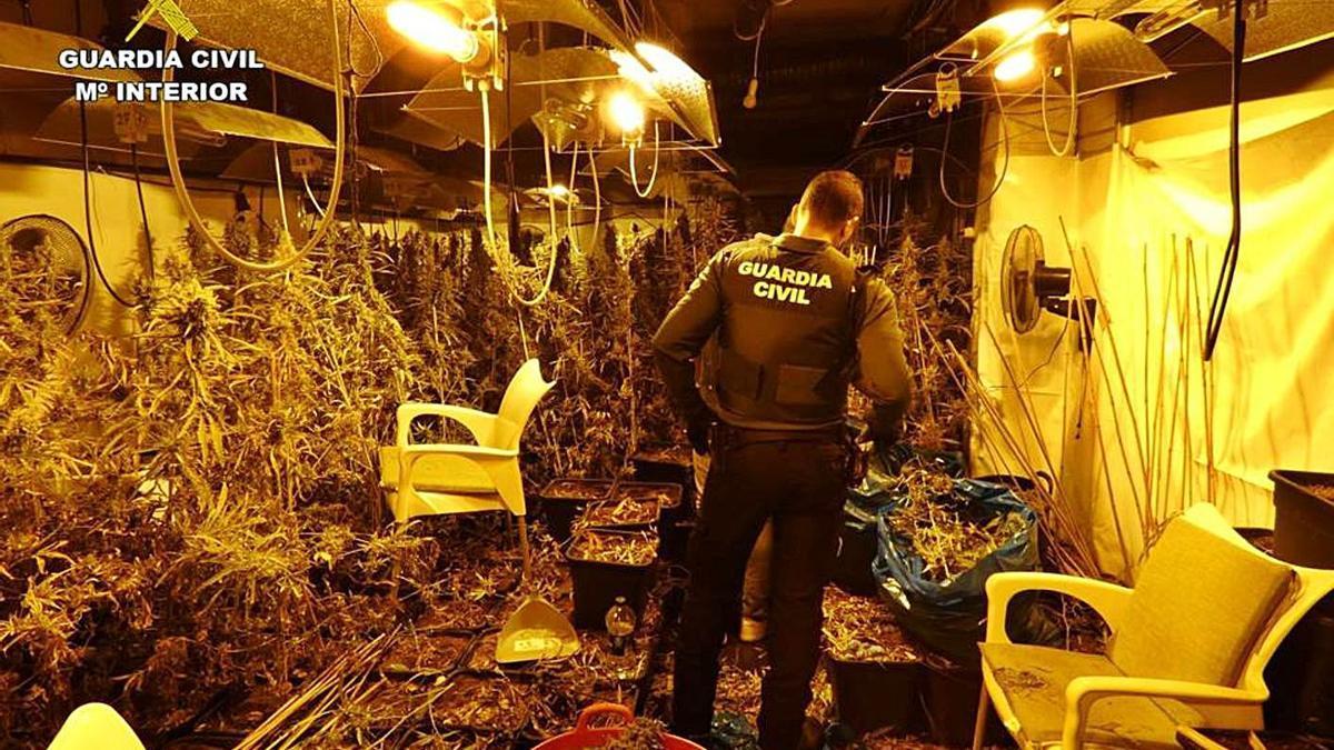 Una de las plantaciones de marihuana desmanteladas por la Guardia Civil.