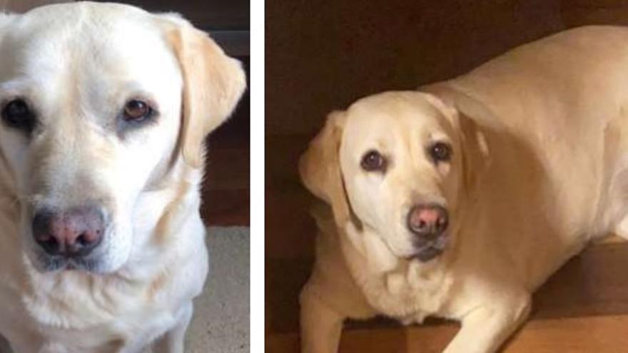 Buscan a un perro perdido en San Mateo