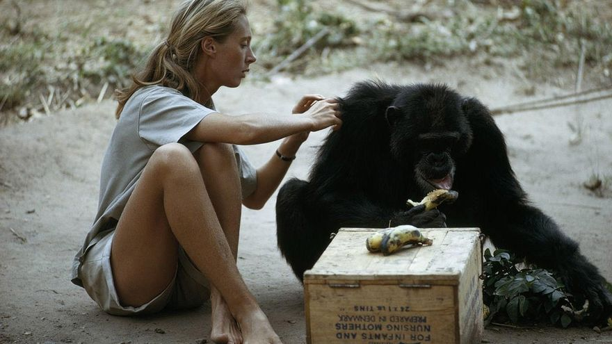Disney+ homenajea a Jane Goodall con el documental 'Jane'