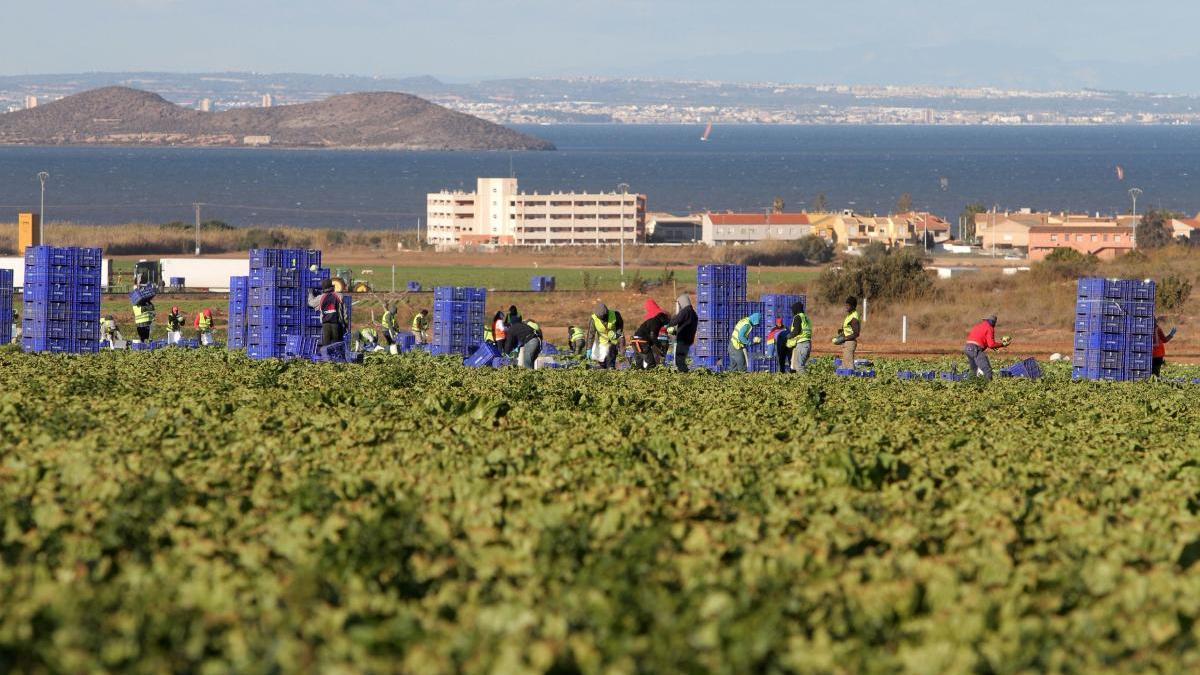 Destacan que el sector agrícola del Campo de Cartagena posee un alto nivel de desarrollo tecnológico.