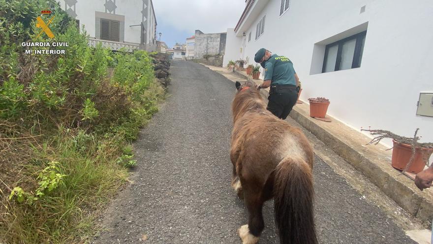 Abandono animal al tener un poni sin las condiciones mínimas de alimentación y habitabilidad en Gran Canaria