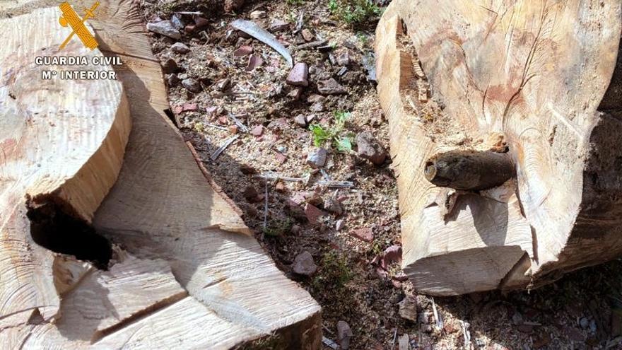 Localizan un proyectil de mortero de la Guerra Civil dentro de un tronco