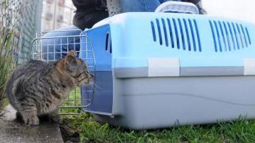El Concello pide colaboración para dar con los autores del envenenamiento a una colonia de gatos