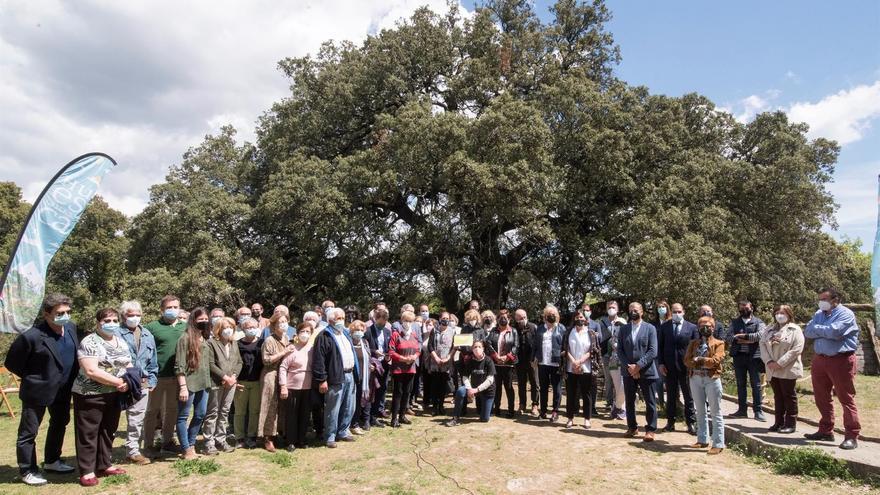 La carrasca de Lecina recibe el diploma de mejor árbol europeo