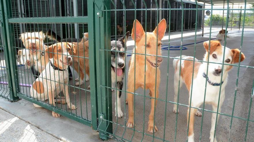 Os Palleiros denuncia la lentitud de la Justicia en el caso de maltrato de un perro en Pontevedra
