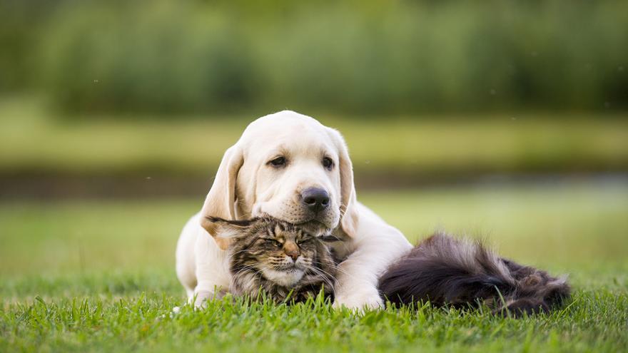 Los animales dejan de ser considerados cosas a efectos legales