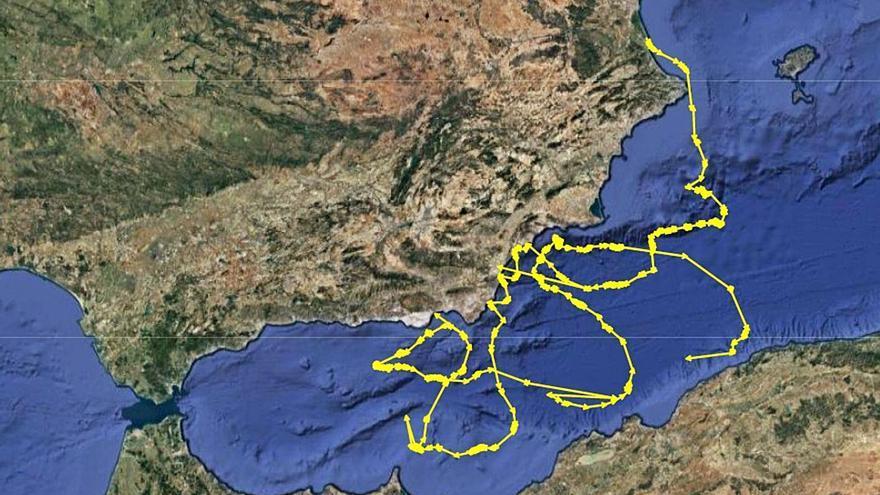 La tortuga que desovó en Cap Blanc no para quieta