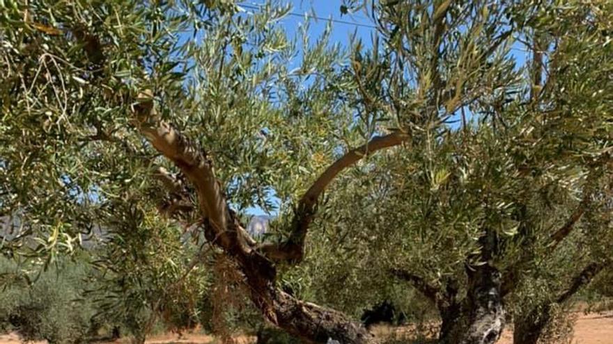 Rossell clama por una caja de Telefónica colocada en un olivo