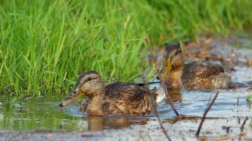 Almassora hará del avistamiento de aves un producto turístico