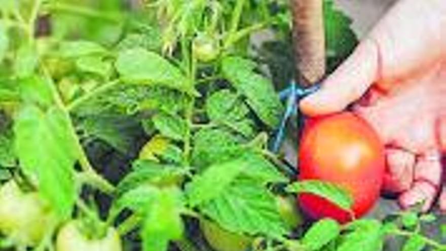Copons viurà la seva primera edició de la Mostra Hortícola el diumenge 29 d'agost amb l'objectiu de potenciar l'horticultura del municipi