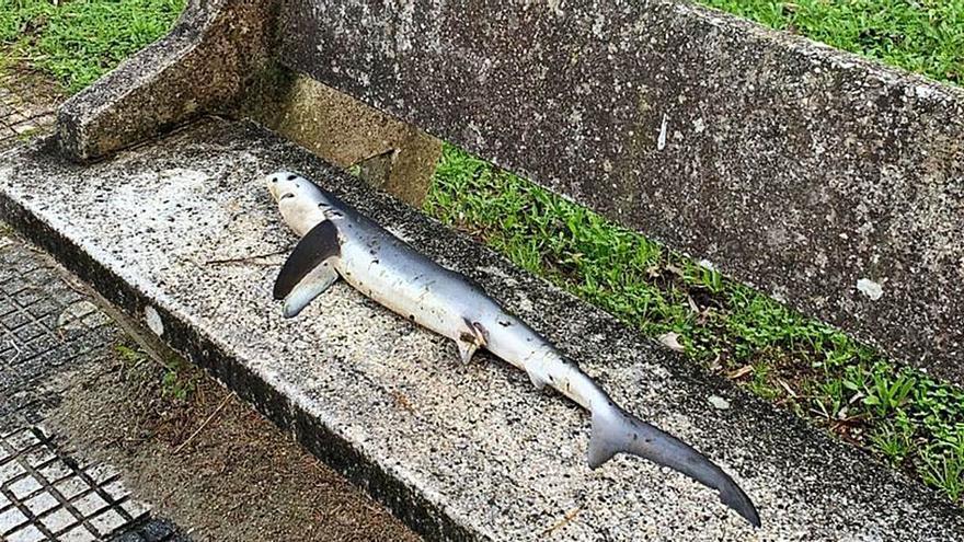 """""""Sharknado"""" en Aldán"""