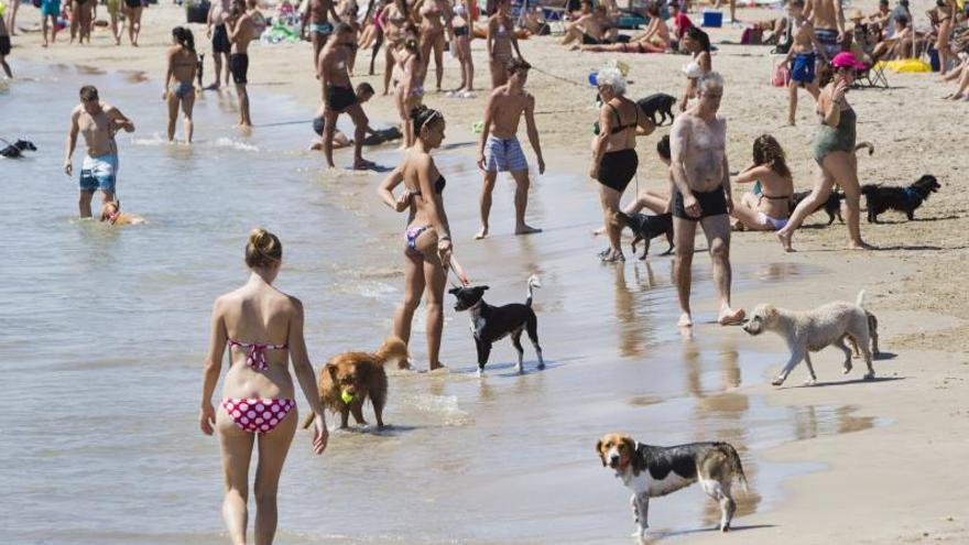 La playa canina de Pinedo aumenta un 50 % su superficie