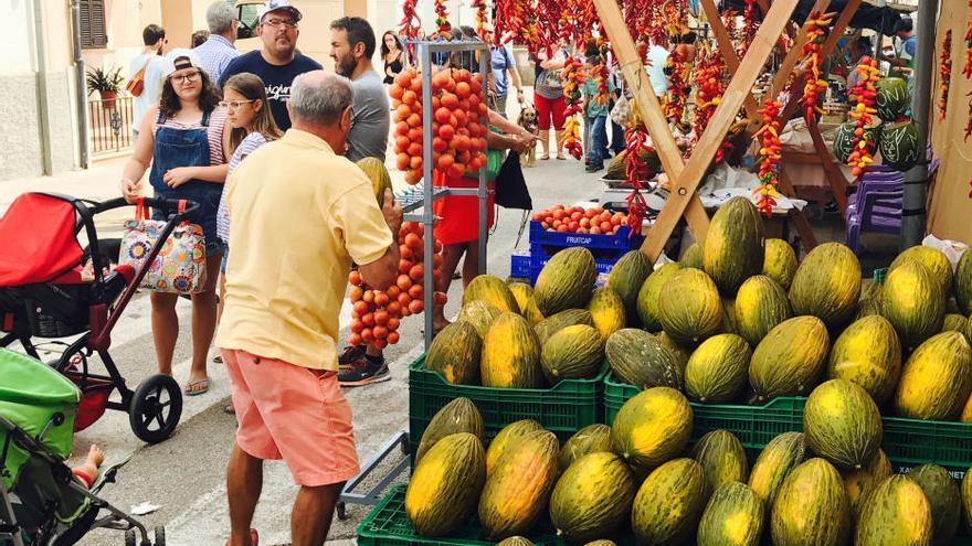 18,4 Kilo - Mallorca feiert die schwerste Melone