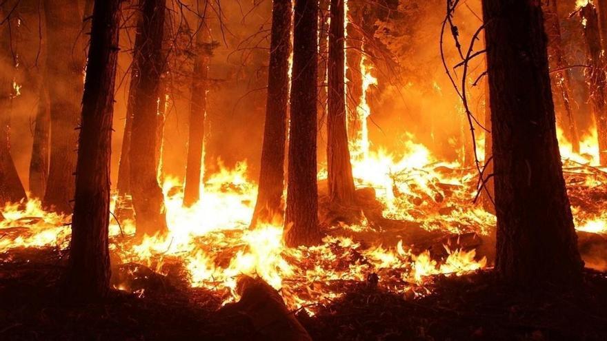 Cómo reaccionar ante un incendio forestal si te encuentras al volante
