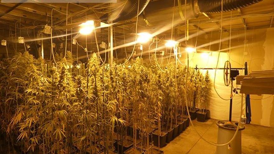 Desmantellen una plantació de marihuana en dues naus industrials a Santa Llogaia d'Àlguema