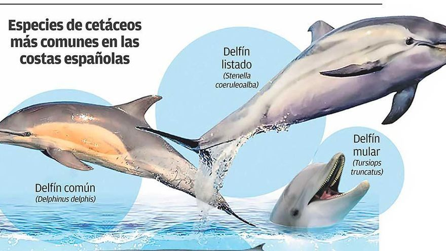 El canvi en el clima intensifica la pressió sobre els cetacis