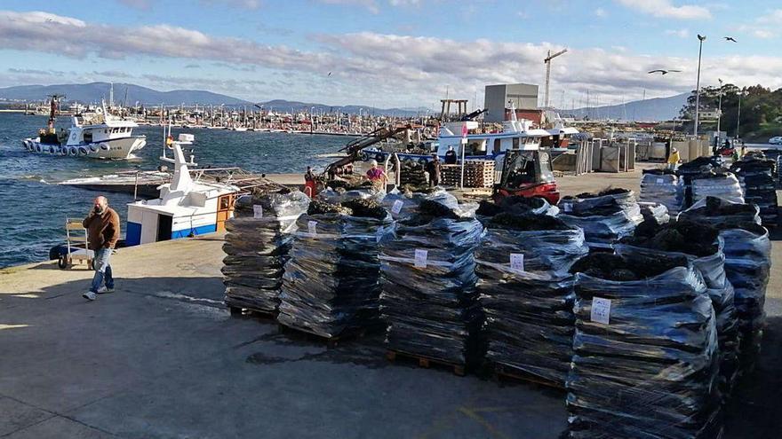 La escasez de mejillón eleva su precio en los puertos gallegos entre 5 y 10 céntimos por kilo