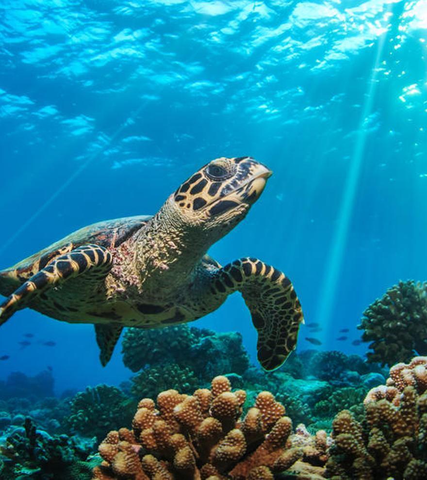 Las olas de calor en los océanos desplazan a las especies miles de kilómetros