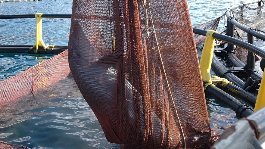 Los ecologistas proponen instalar cámaras a bordo para proteger a los delfines