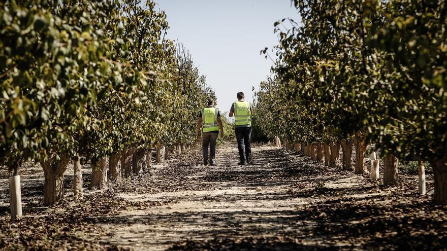Nueve investigados y 760 kilos de fruta recuperada de robos en el Medio Vinalopó