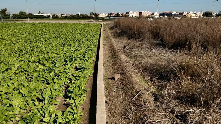 El ayuntamiento sancionará a los dueños de campos abandonados